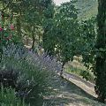 Détail jardin